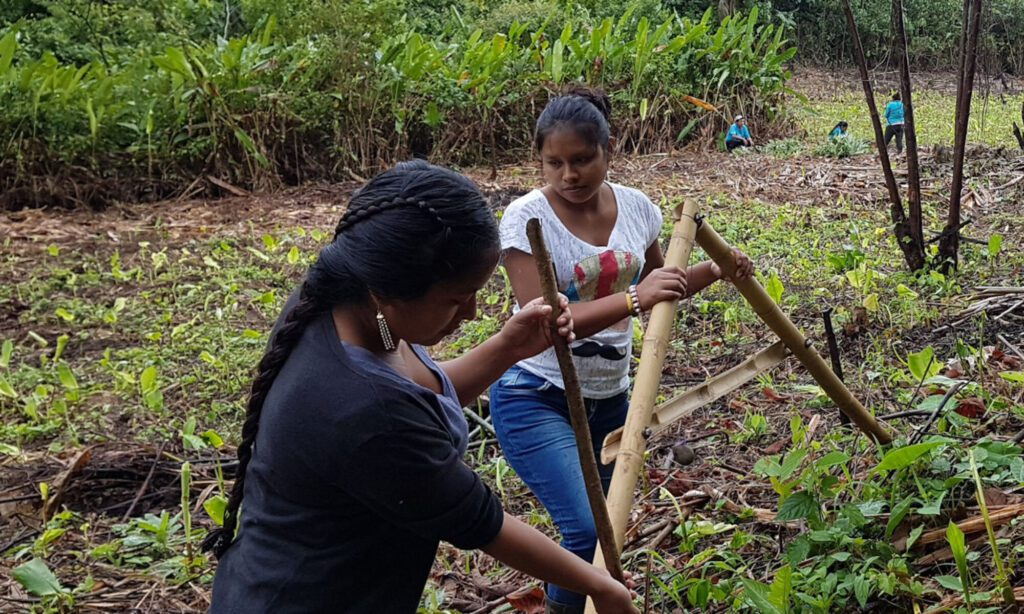 Agroforestry Regenerative Community. Photo from Tatin Village of Guatemala from Contour Lines