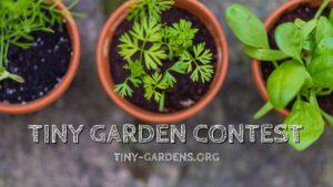 Tiny Garden Contest