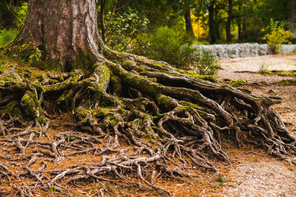 Deeper Roots - photo by Ellis Garvey