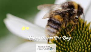 Read more about the article Celebrating the Life of Bees