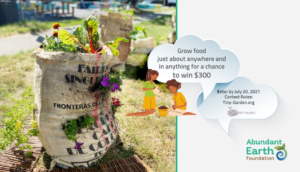 Read more about the article Starting Small With Tiny Gardens