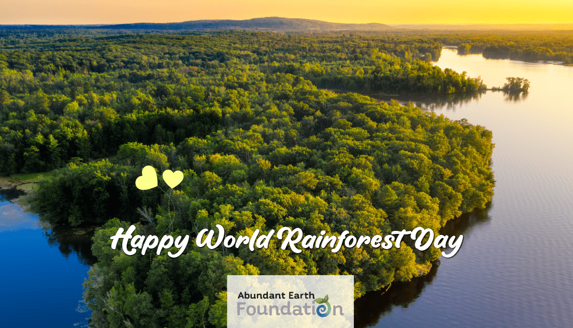 Read more about the article Celebrating World Rainforest Day